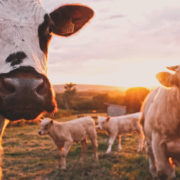 Creston Valley farm Insurance